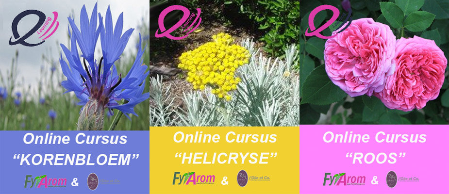 Online-Cursus