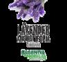 Lavender Angustifolia Cream